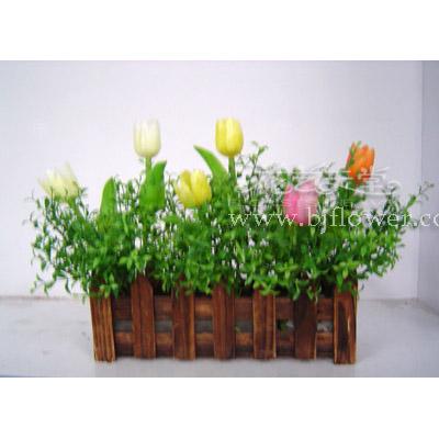 北京花卉-花艺天堂-园林木艺实景展示之十二:花盒花槽